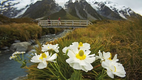 Wildflowers, a bridge over a creek and mountains in the background