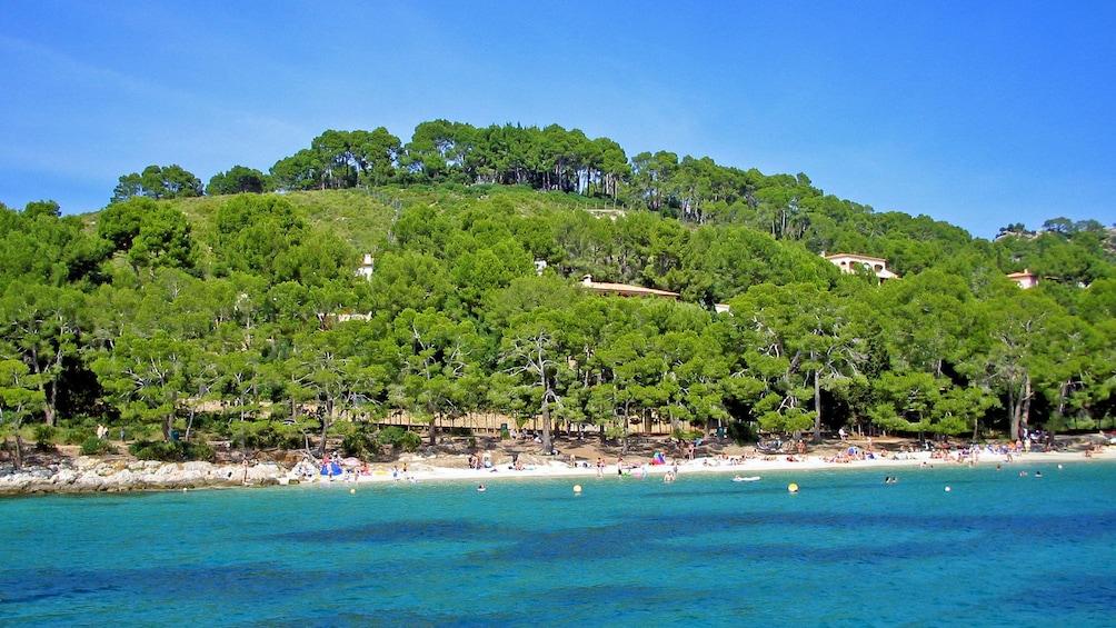 Show item 3 of 6. Jungle coastline of Pollensa Bay