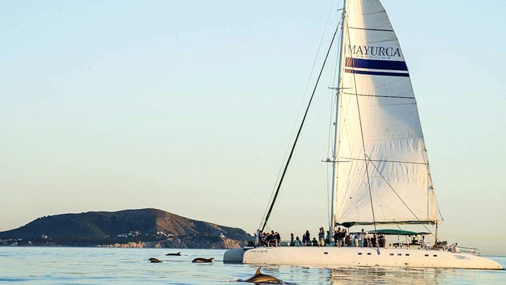 Foto 4 von 6 laden Catamaran sails along side dolphins in Mallorca Island