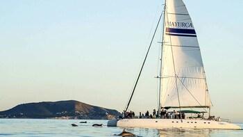 Croisière agréable d'une demi-journée en catamaran au départ de Cala Ratjad...