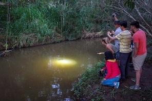 Rainforest & Nocturnal Wildlife Tour
