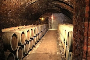 Tour of the organic wineries in the Piacenza hills