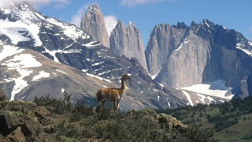 Close view of the mountains and deer at Torres del Paine National Park