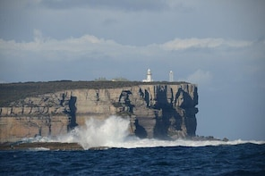 Jervis Bay Passage Tour