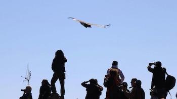 5-Day Condor Flight & Lake Titicaca Tour