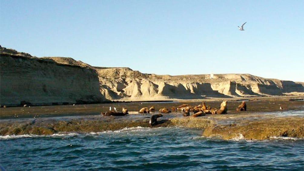 Show item 1 of 2. Scenic Peninsula Valdes in Puerto Madryn