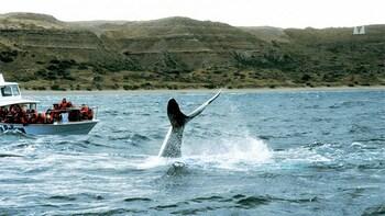 Valdes Peninsula & Whale or Seal Watching in Piramides