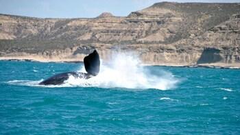 Peninsula Valdes, San Lorenzo Ranch & Whale-Watching Cruise
