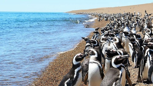 penguins at the beach in Argentina