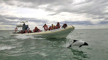 Chubut Valley & Welsh Villages with Dolphin-Watching Cruise