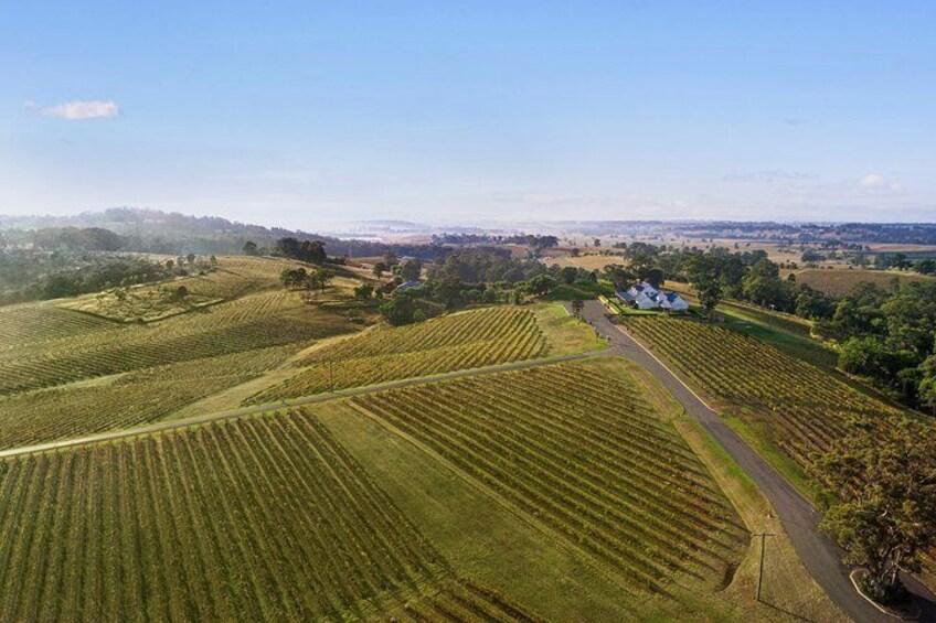 Audrey Wilkinson Vineyard, Hunter Valley NSW