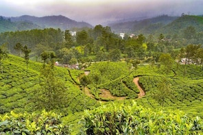 7 Days Best of Kerala Nature Tour Backwaters & Beaches
