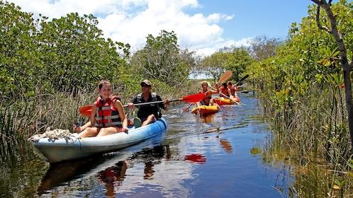 Kayaking group going through a marsh in Australia