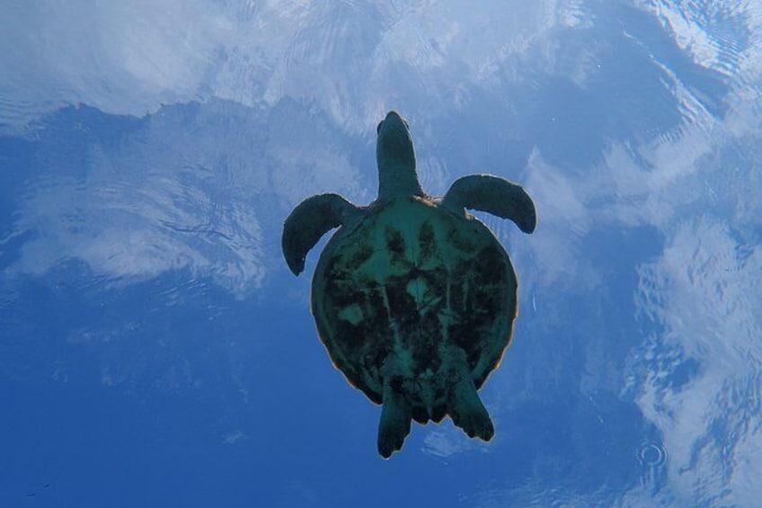 [Okinawa Miyako] Swim in the shining sea! Sea turtle Snorkeling