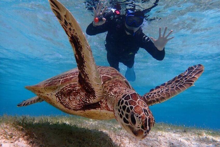 [Okinawa Miyako] [1 day] Pumpkin Limestone Caving & Sea Turtle Snorkeling