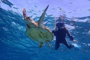 [Okinawa Miyako] [1 day] Superb view beach SUP / Canoe & sea turtle Snorkel...