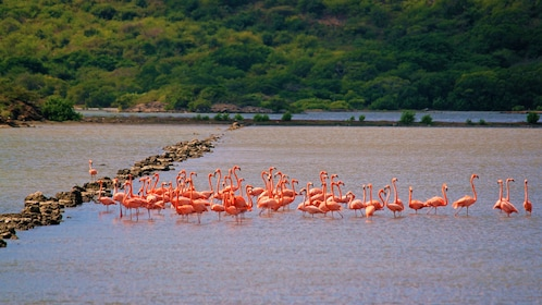 large group of flamingos in water