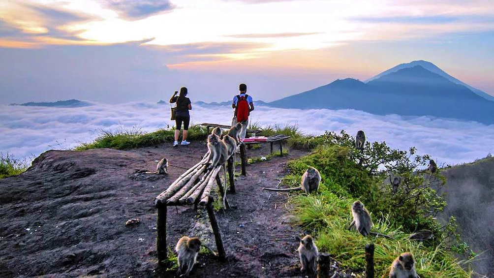 Tampilkan item 5 dari 5. At the top of the mountain with wild monkeys in Indonesia