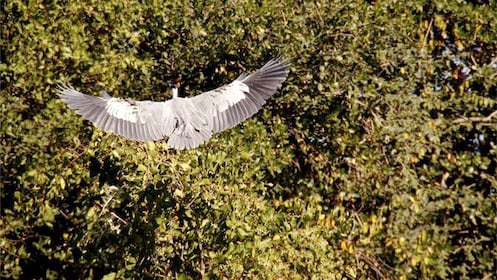Bird flying in Rio de Janeiro