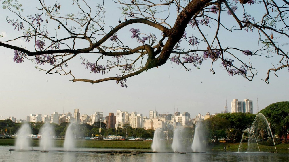 Trees, pond and fountains at Ibirapuera Park in Sao Paulo