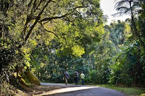 Private Atlantic Forest Eco Tour at Cantareira State Park