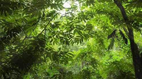 Sunlight streaming through the lush trees in the rainforest in Paraty