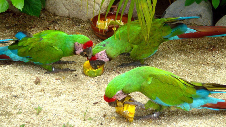 Ixtapa City & Countryside Tour