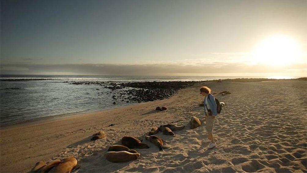 Tourists at Galapagos during sunset
