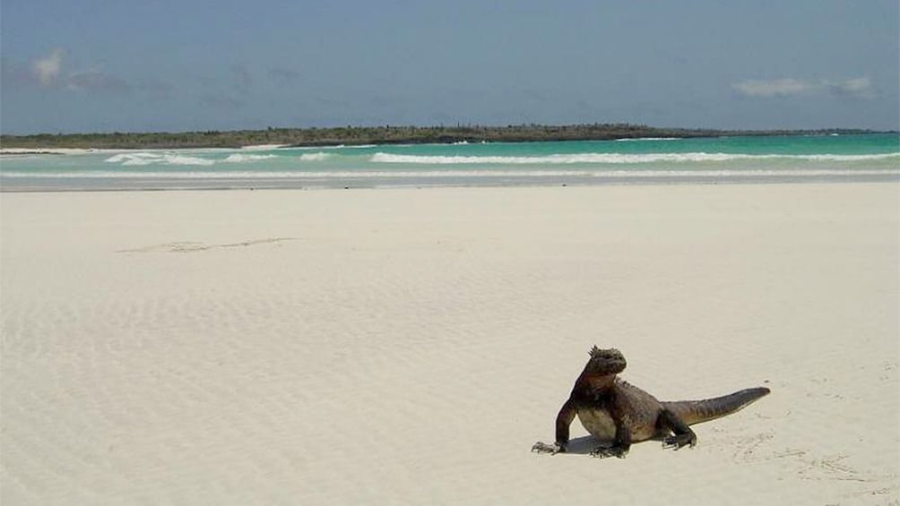 Show item 3 of 4. Tortuga Beach in Galapagos