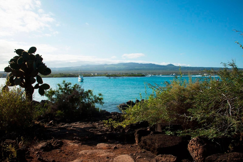Show item 5 of 8. 4-Day Galápagos Islands Flash Tour with 3-Star Hotel