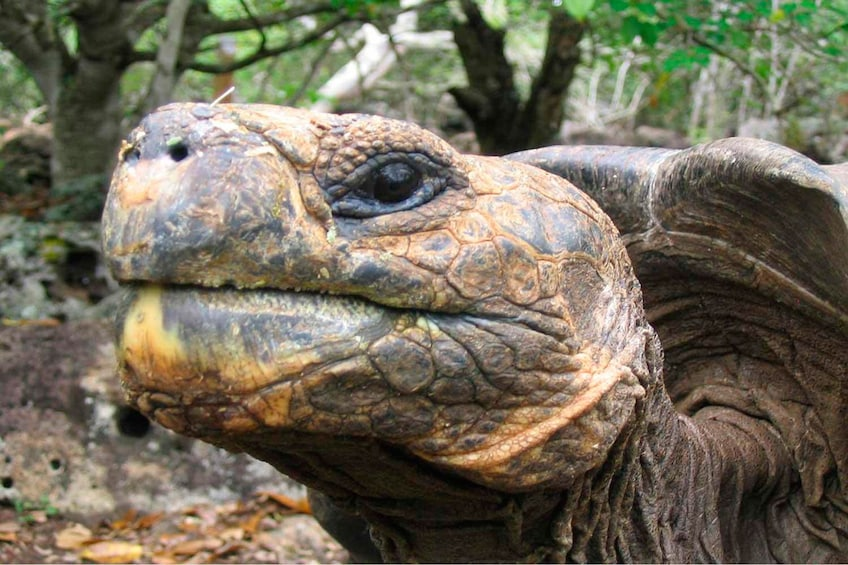 Show item 4 of 8. 4-Day Galápagos Islands Flash Tour with 3-Star Hotel