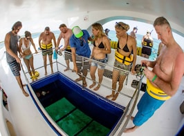 Glass-bottom Catamaran with Snorkeling, Stingrays & Sharks