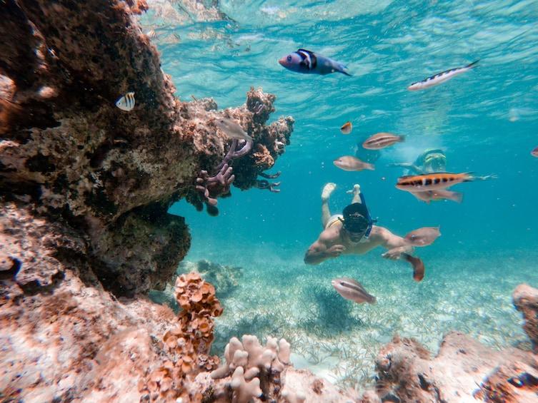 Foto 5 von 10 laden Glass-bottom Catamaran with Snorkeling, Stingrays & Sharks