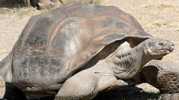 5 Day Galapagos Islands Traditional Tour With 4 Star Hotel