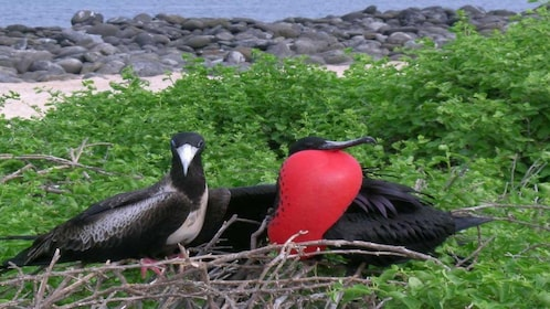 5 Day Galapagos Islands Traditional Tour With 5 Star Hotel
