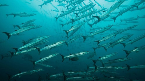 School of fish on the Galapagos Islands