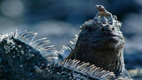 Animals in Galapagos Islands