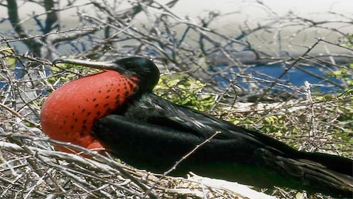 Bird on Galapagos Islands