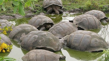 5 Day Galapagos Islands Ideal Tour With 3 Star Hotel