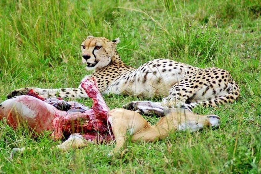 3 Days, 2 Night - Amboseli National Park Safari