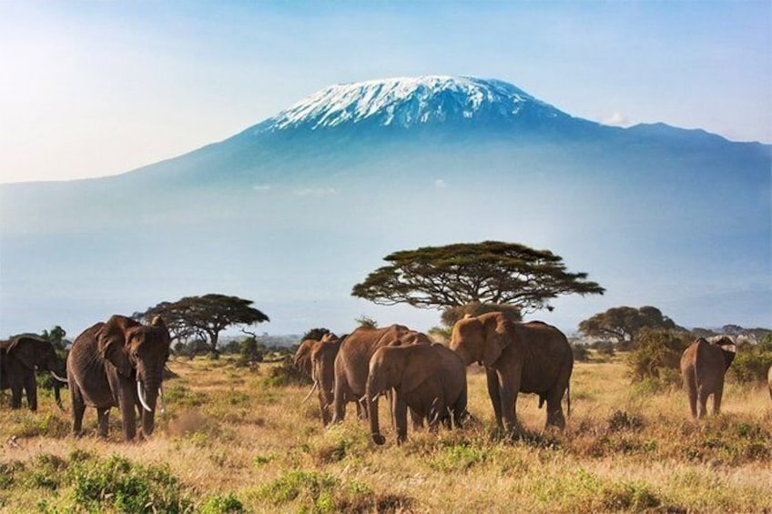 2-Day Tour Amboseli National Park (Home of Large Elephants and Herds)