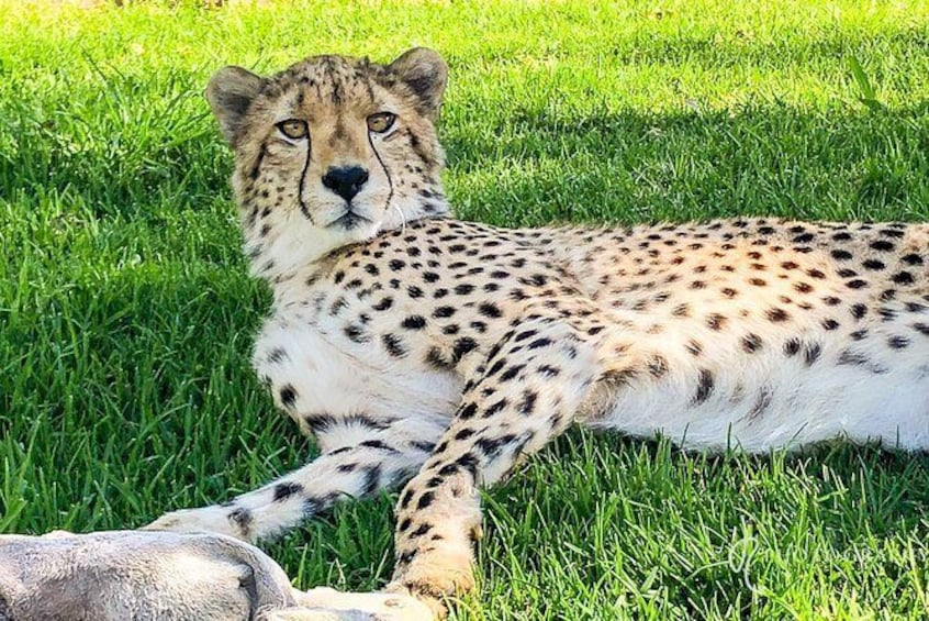 Show item 2 of 3. Ultimate Cheetah Experience & Botanical Garden Tour