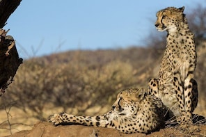 Ultimate Cheetah Experience & Botanical Garden Tour