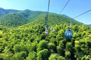 Yixing Bamboo Forest Private Day Tour from Wuxi with Lunch