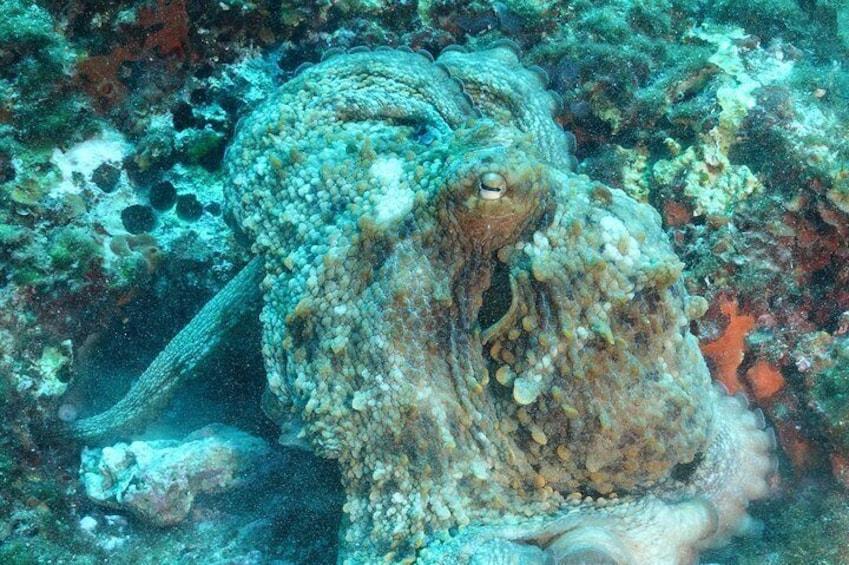 Open Water Diver course + underwater photo shooting