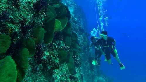 People scuba diving in Punta Cana