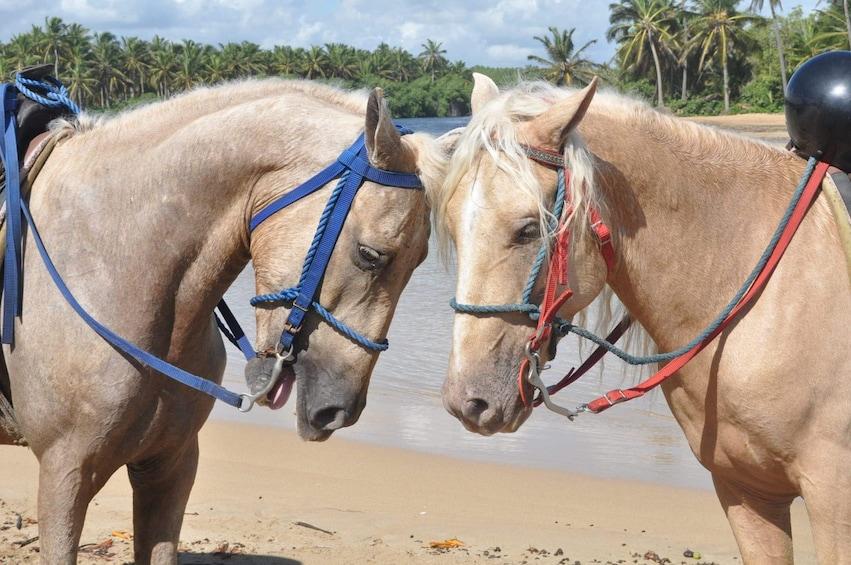 Foto 5 von 10 laden Horseback Riding Experience