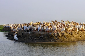 2 Day Dakar, Goree Island,Pink Lake and Bandia Park safari