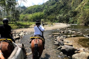 Cocora Valley + Horseback Riding Day Trip