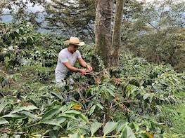 Coffee Farm Hacienda El Ocaso Half-Day Tour